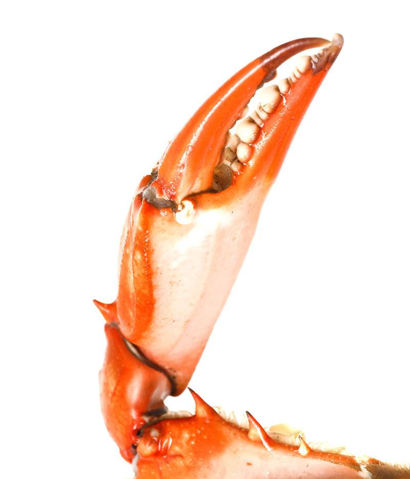 Mackerel on crushed ice